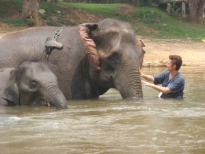 Bathing Thai Elephant